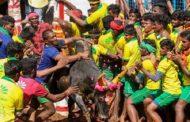 உலக புகழ்பெற்ற அலங்காநல்லூர் ஜல்லிக்கட்டு... சீறி பாயும் காளைகள்!