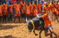 உலக புகழ்பெற்ற ஜல்லிக்கட்டு போட்டிகள் தொடங்கியது- நேரலை வீடியோ!
